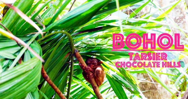 薄荷島景點|包車Tour必備景點眼鏡猴子+巧克力山